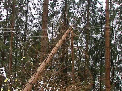 Görtschitztal Unwetter Baum auf Strommasten