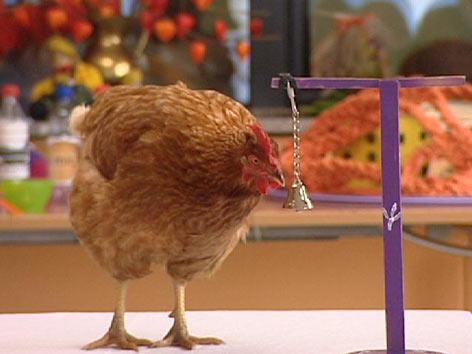 Therapie mit Hühnern im Altersheim