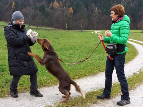 Hund springt an Spaziergängerin hoch
