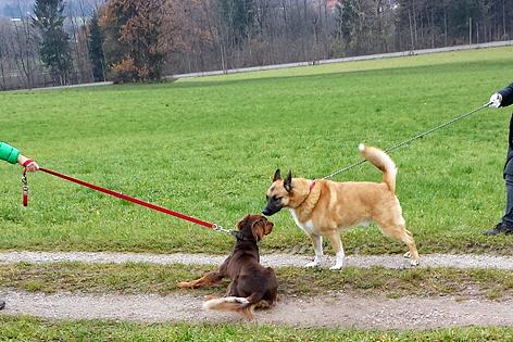 Hunde beschnüffeln sich
