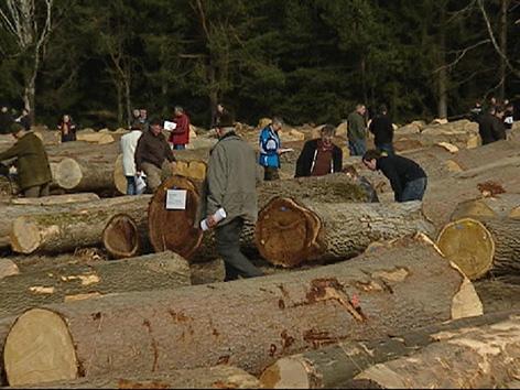 Licitacija vrednih sort les hlodi Tomažej Marian Slovenj Gradec gozdarski