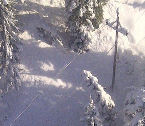 Bäume bedrohen Stromleitungen