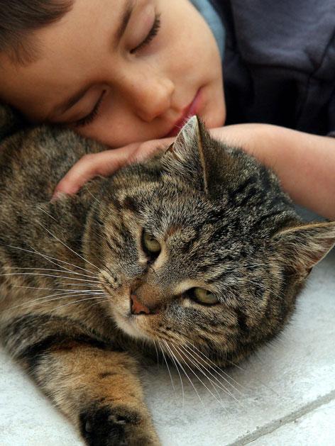 Bub mit Katze schlafend