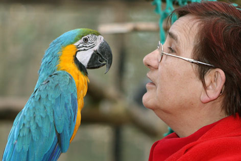 Papagei mit Frau