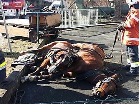 Unfall Mit Pferd Heute