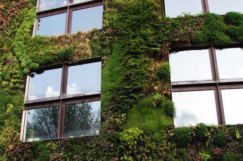 Vertikale gr n bepflanzung radio salzburg - Vertikale wandbepflanzung ...