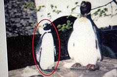 Suche nach gestohlenem Pinguin