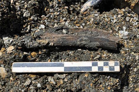 prähistorischer Fund Steinbock