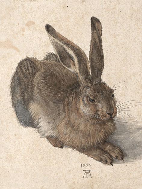 Albrecht Dürer Feldhase, 1502