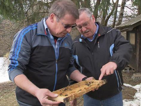 Bienenzüchter begutachten von Bär zerstörte Bienenwaben