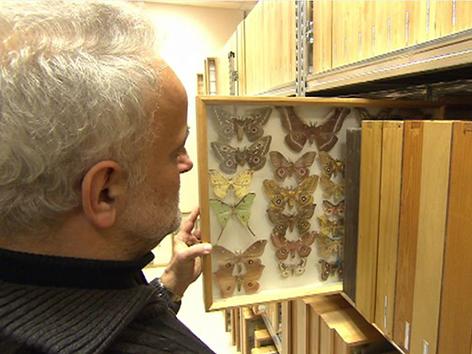 Christian Wieser vor der Schmetterlingssammlung des Kärntner Landesmuseums