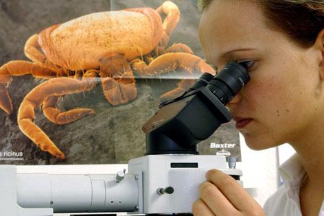 Forscherin im Labor vor einem Zeckenplakat