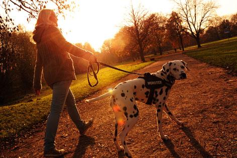 Frau geht mit Hund in der Abendsonne spazieren