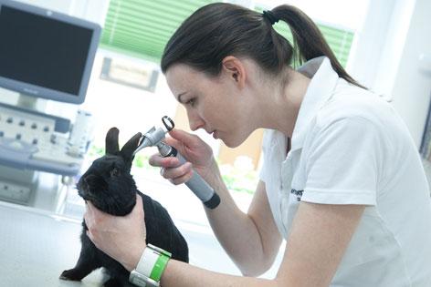 Tierärztin untersucht das Ohr eines Kaninchens