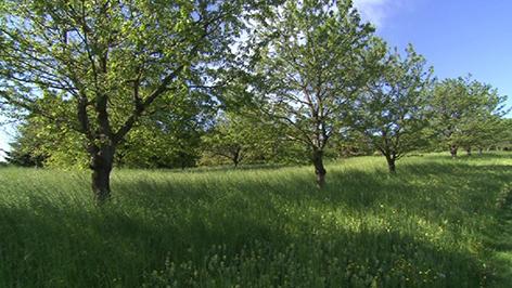 Natura 2000 Forchtenstein