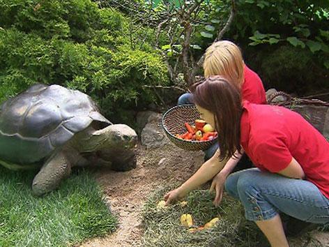 Tierpflegerinnen beim Schildkröten füttern