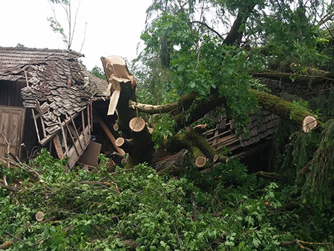 Bäume gekappt