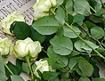 Rote und weiße Rosen auf einer Gedenktafel im ehemaligen KZ Buchenwald