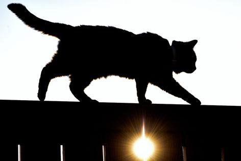 Katze auf einem Balkongeländer im Gegenlicht