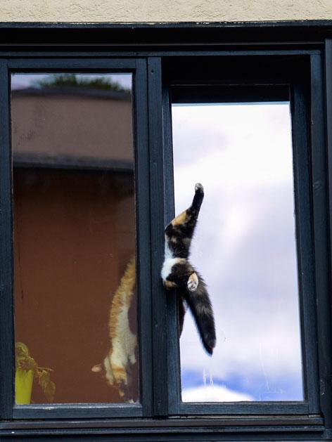 Katze in einem Kippfenster eingeklemmt