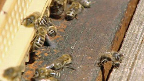 Pčele med