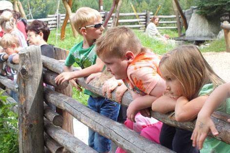 Kinder beim Gehege der Urwildpferde im Ötzidorf.