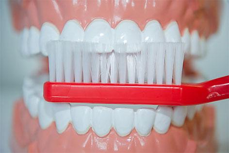 Zahnbürste mit Gebissmodell
