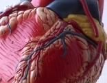 Herz, Gesundheit, Herzkammerflimmern