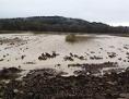 poplavljeno polje