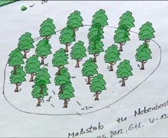 25 Stieleichen müssen auf künstlichem Hügel gepflanzt werden