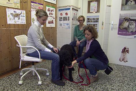 Tierarzt in Ordination mit Hund