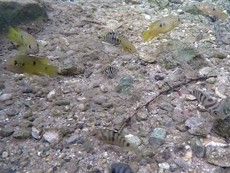 Tropenfische im Warmbach