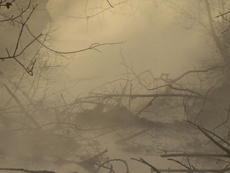 Warmbach im Nebel