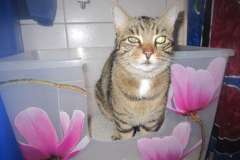 Katze in geblümter Toilette