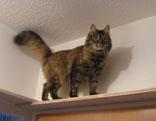 Katze auf einem Brett unter der Decke