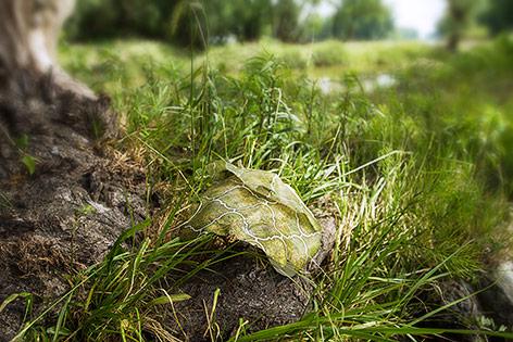 Plastikmüll im Nationalparkgebiet Donauauen bei Schönau an der Donau