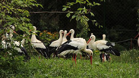 Chernel kert gólyák