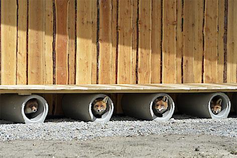 neues Fuchsgehege