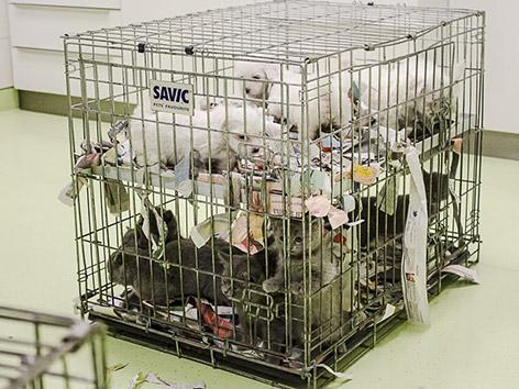 Tierschmuggler gestoppt Klagenfurt Tiko Tiertransport