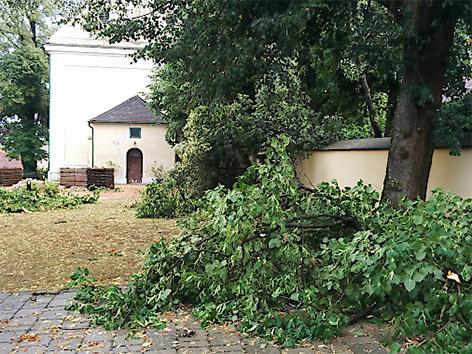 Umgestürzte Bäume in Großpetersdorf