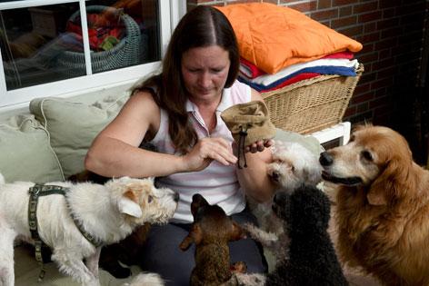 Mehrere Hunde werden von einer Frau gefüttert