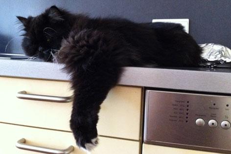 Katze liegt auf dem Küchenschrank