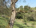 Helixgarten Gut gepflanzt
