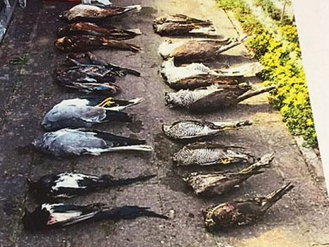 Tote Greifvögel
