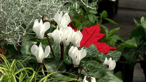 Blumen für das Grab
