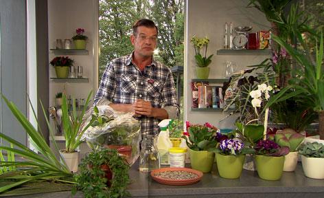 Karl Ploberger inmitten von gesunden und kranken Pflanzen
