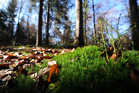 Wald Blätter Sujet