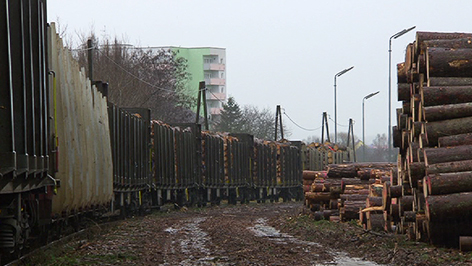 Mit Holz beladener Güterzug im Bahnhof Oberwart