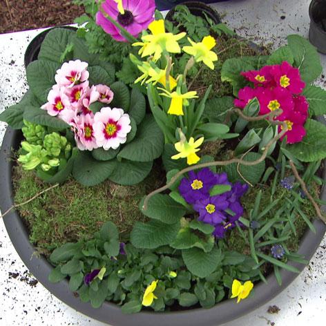 Frühlingsblumenschale
