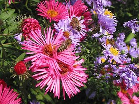 Blüten, Bienenweiden